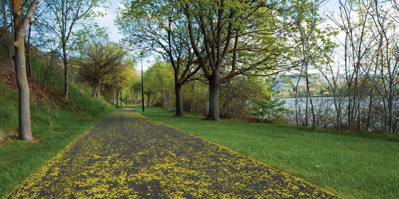 Blossom-covered pathway next to the Snake River in Clarkston, lined with trees and lampposts